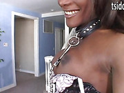 Black big dick shemale Amyiaa Starr gets a collar on and blows